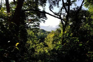 Tropisch regenwoud in Bwindi Impenetrable National Park